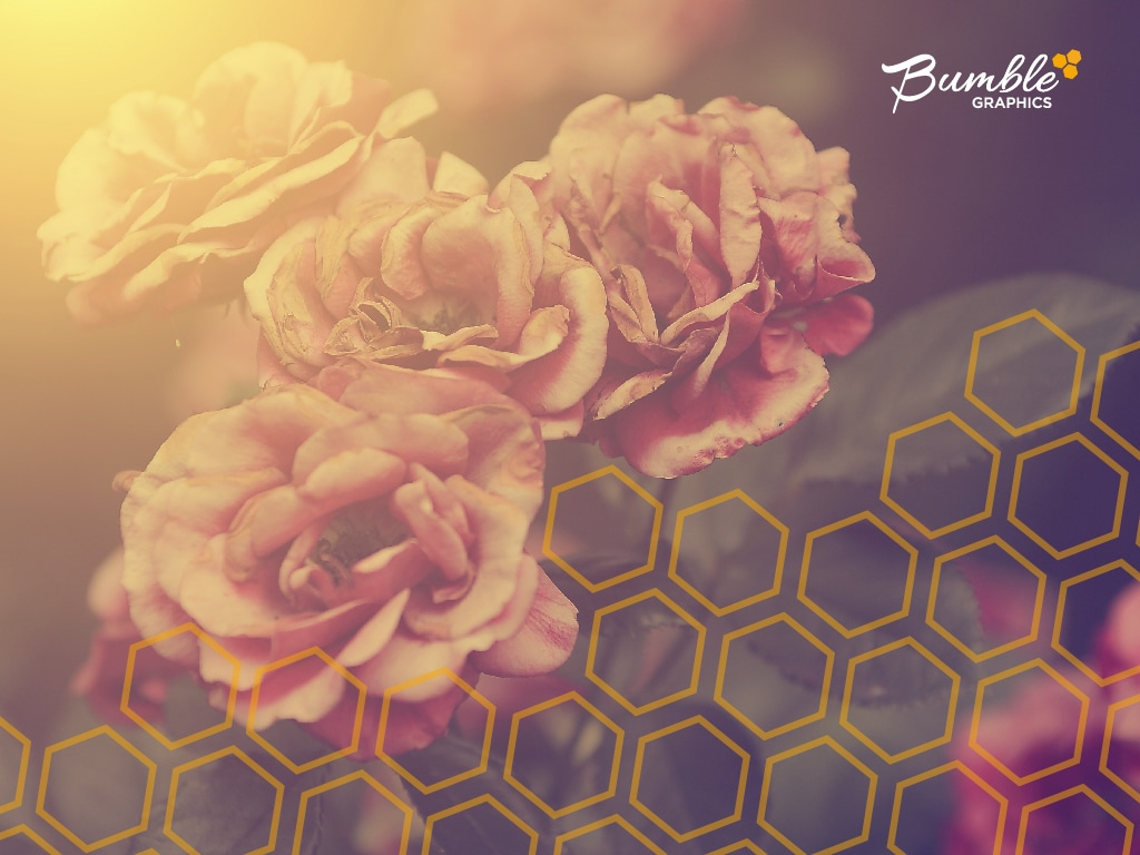 Bumble Graphics May 2017 Wallpaper